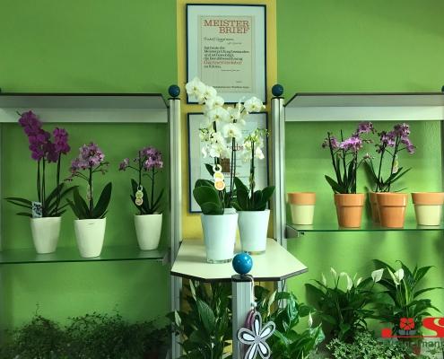 IMG 3337 495x400 Das Blumenfachgeschäft