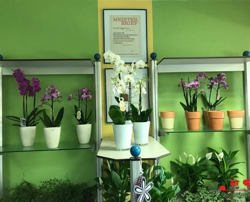 IMG 3338 495x400 Das Blumenfachgeschäft