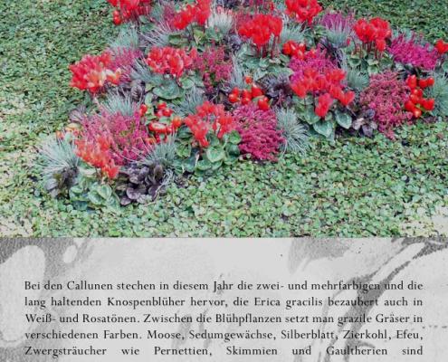 t02c 495x400 Blumen   Zeichen des Gedenkens